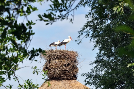 nouse: Stork on a house roof.