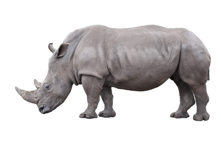 rhinoceros isolated on white background Stock Photo