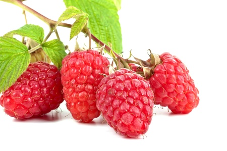 Branch of a fresh raspberry on a white background Stock Photo