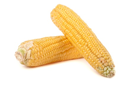 Corn on white Stock Photo - 10421469