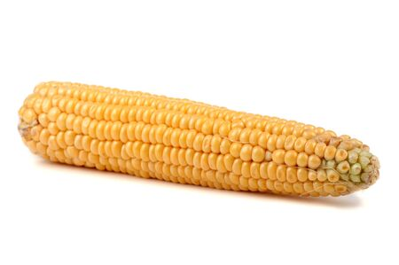 Corn on white Stock Photo - 10421470
