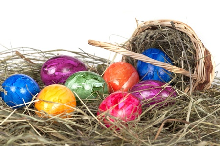 Easter eggs on a grass photo