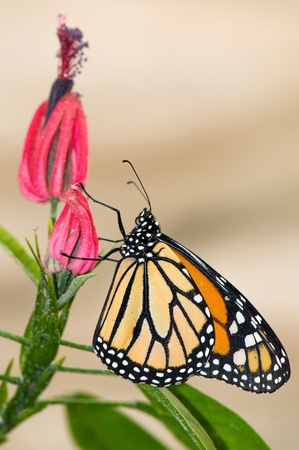 temperate: The butterfly sitting on a branch