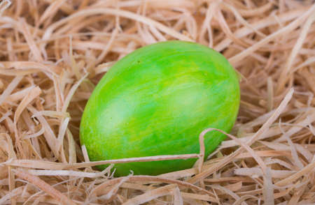 wood shavings: Colorful painted easter egg in wood shavings Stock Photo