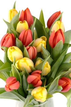 fresh spring tulips on a white background Stock Photo - 17652185