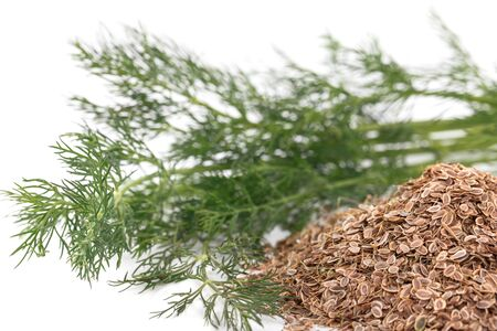 fresh dill and dry on a white background photo