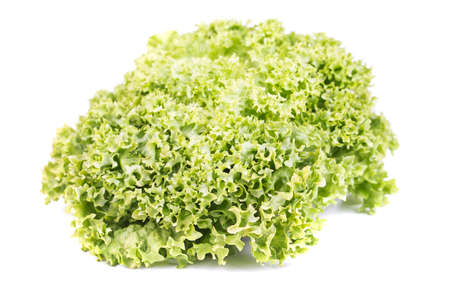 Fresh Lettuce salad on a white background Stock Photo - 18373303