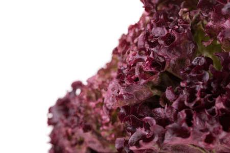 vibrat color: Fresh Lettuce salad on a white background
