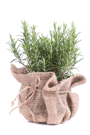 flavoring: rosemary in bag on a wooden background Stock Photo