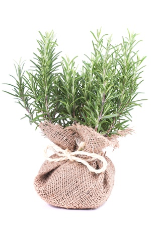 Fresh rosemary in a bag on white background