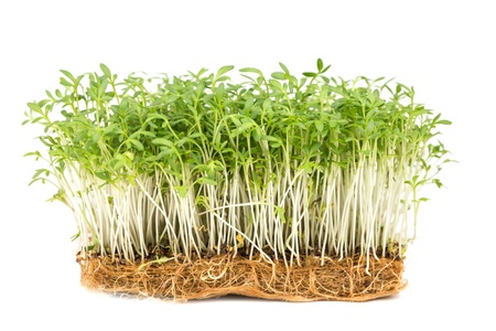 Fresh green watercress on a  white backgrounds Stock Photo - 18981723