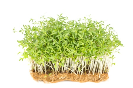 Fresh green watercress on a  white backgrounds
