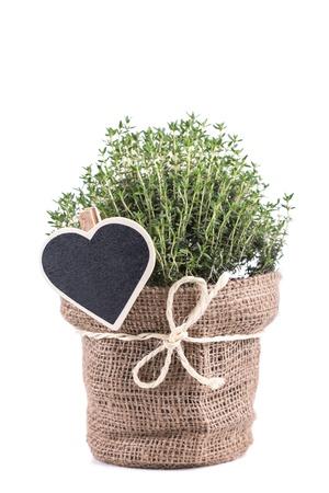 Fresh herbs in bag  on white background