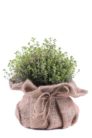 thyme: Fresh herbs in bag  on white background