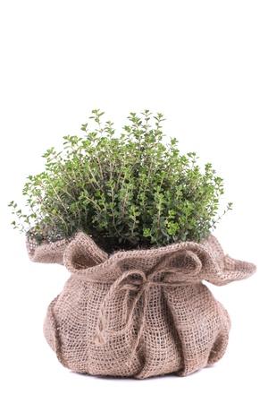 tomillo: Hierbas frescas en bolsa en el fondo blanco