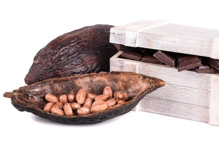 cocoa fruit and ripe on a white background photo
