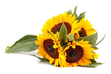 Bouquet of sunflowers on a white background  photo