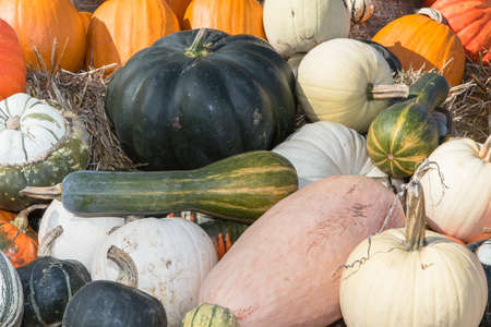 pumpkins in the autumn as a background photo