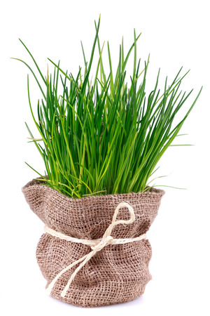 Spring Onion in bag on white background