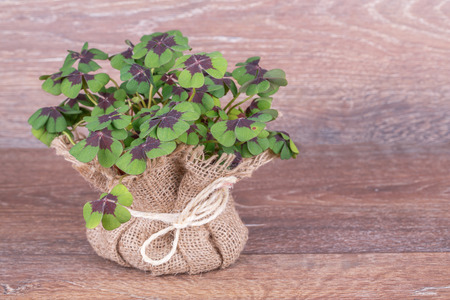green clover plant in bag on wooden background photo