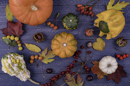 Autumn background with various berries and leaves Stock Photo