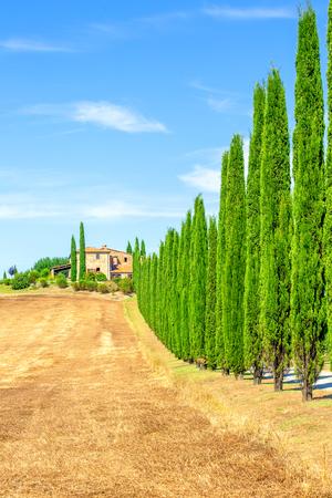 Italienische Zypressenreihen und eine ländliche Landschaft der Straße