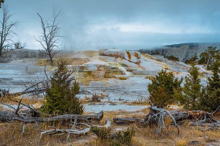 Minerva Terrace, Yellowstone National Park, Wyoming, USA