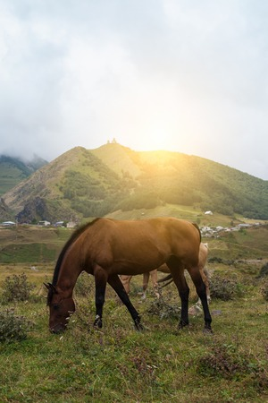 Mountain landscape with grazing horses. In Georgia Stock Photo