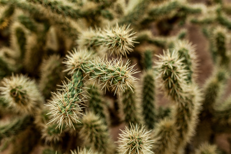 A large cactus with thorns in the wild spiny background close up