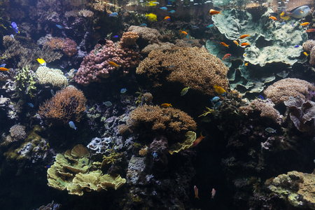 Tropical fish with corals and algae in blue water. Beautiful background of the underwater world