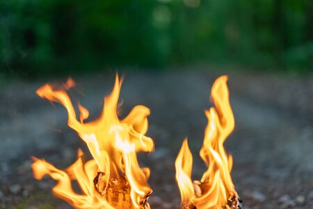 Tongues of flame close on the background of the evening forest. Fire hazard in the forest. Banco de Imagens