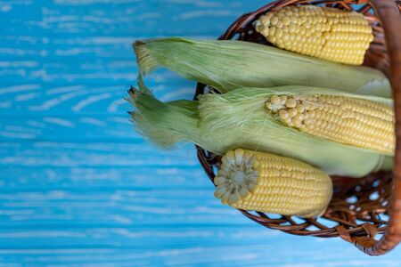 fresh raw corn cob in basket, blue wooden table, color background Summer vegetables  healthy wholesome food.