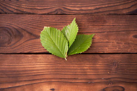 Three green leaves lie on brown wooden background Ecological concept