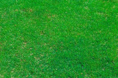cut grass: A Green Evenly Cut Grass Field Stock Photo