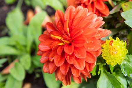 shrubbery: Vibrant Red Flower with Green Shrubbery