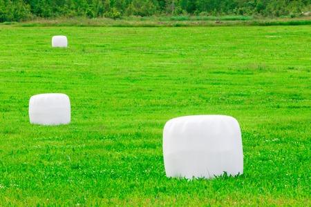 feedstock: Grass in plastic Silage Balls in Sweden