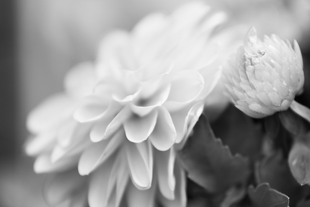 redolence: Black and White Flower with Short Depth of Field