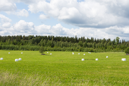 feedstock: Grass in plastic Silage Balls in Sweden
