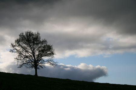 El arbolito solitario en el campo