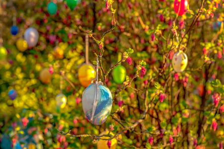 Hedge with colorful plastic eggs - easter custom. Concept: holidays or religion