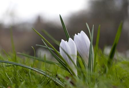 Frühlingsblumen Standard-Bild - 12805684