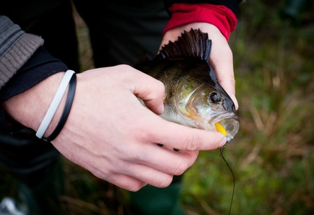Big perch cought on spinning photo