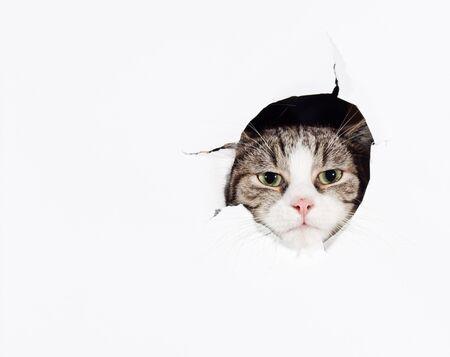 Funny cat legte seinen Kopf in Papier Loch Standard-Bild