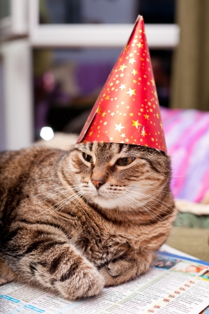 Funny domestic cat wearing a birthday hat and a scarf Standard-Bild
