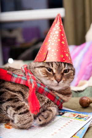 Funny domestic cat wearing a birthday hat and a scarf photo