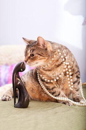 European female cat wearing a necklace  Standard-Bild
