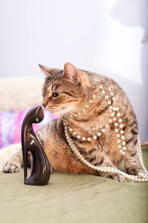 European female cat wearing a necklace  photo