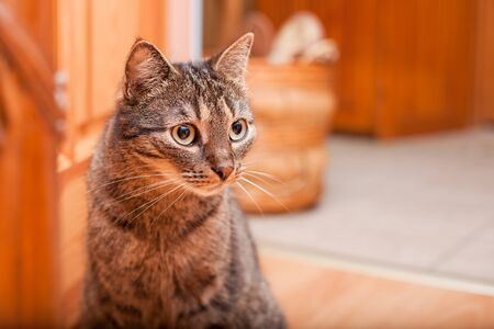 Adult domestic cat with huge dark eyes