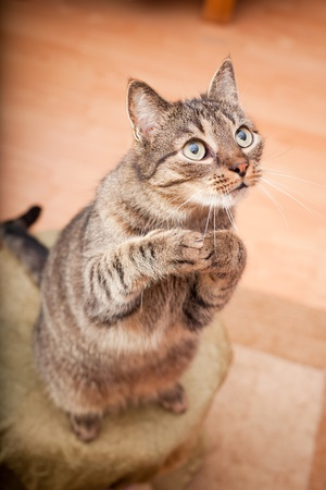 cat tail: European male cat asking for a snack Stock Photo
