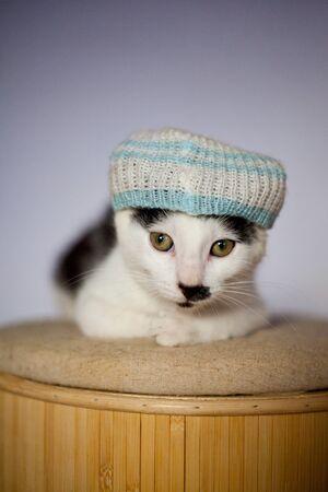 Very funny junge Katze trägt einen Hut und Entspannung auf einem Stuhl Standard-Bild - 17928972
